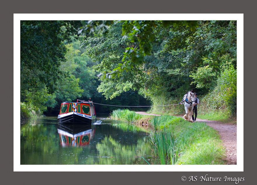 Horse drawn Barge,Grand Western Canal,Devon