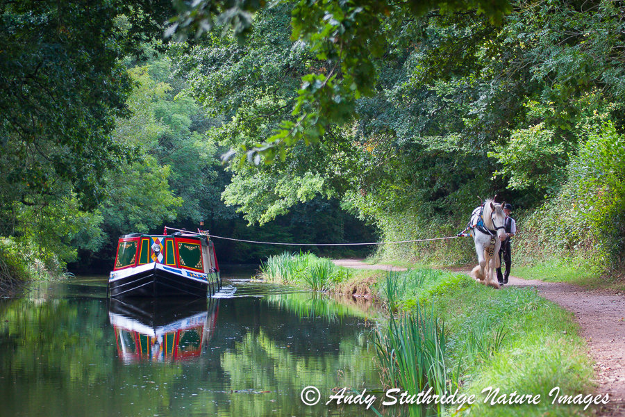 Horse drawn barge on the Grand Western Canal,Devon