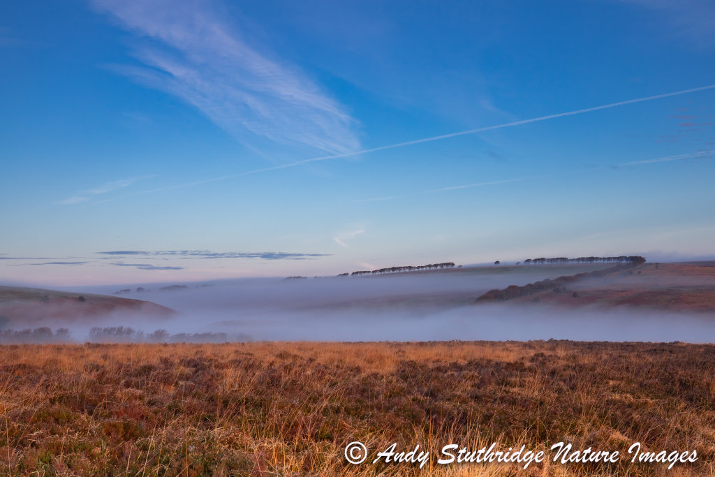 Misty Dawn,Exmoor