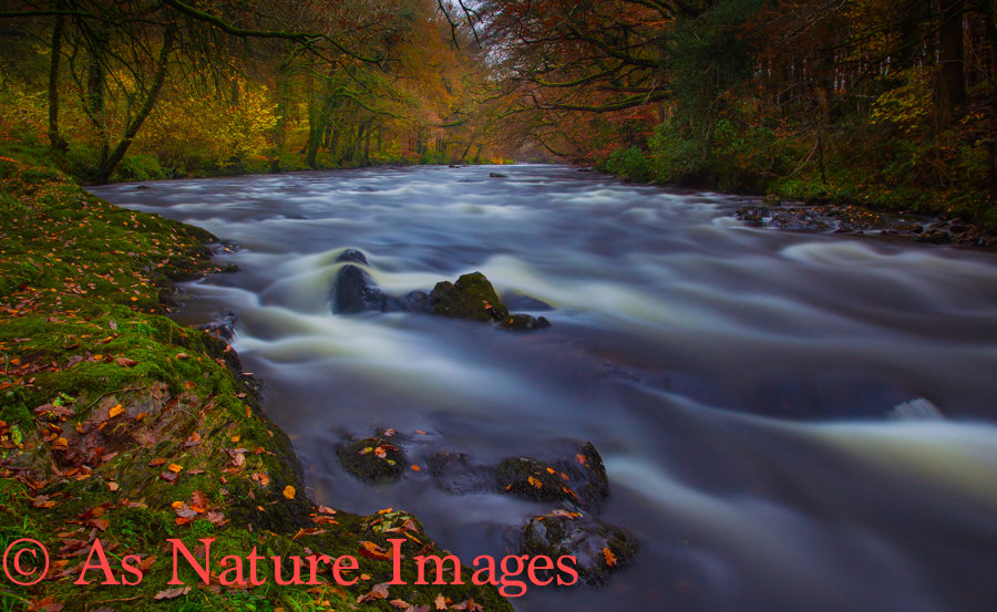 """"""" AUTUMN COLOURS ON THE RIVER DART AT HOLNE ,DARTMOOR """""""