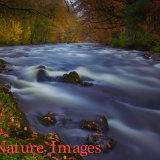 """ AUTUMN COLOURS ON THE RIVER DART AT HOLNE ,DARTMOOR """