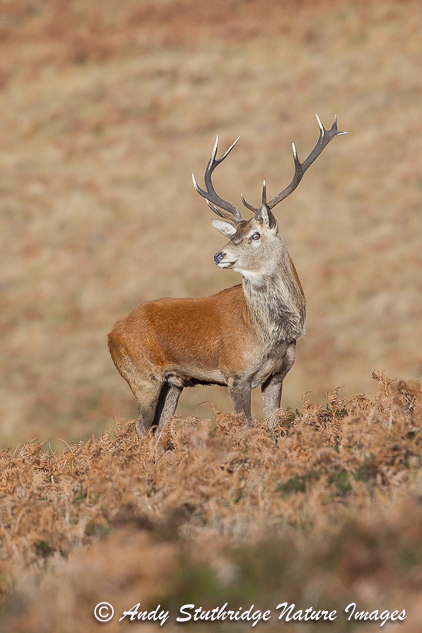 Stag Pose