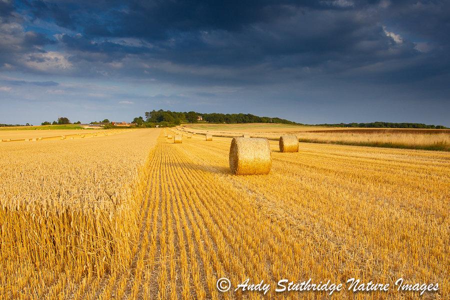 Stormy Harvest,Dorset