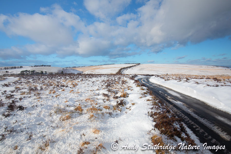 The Way Across the Moor