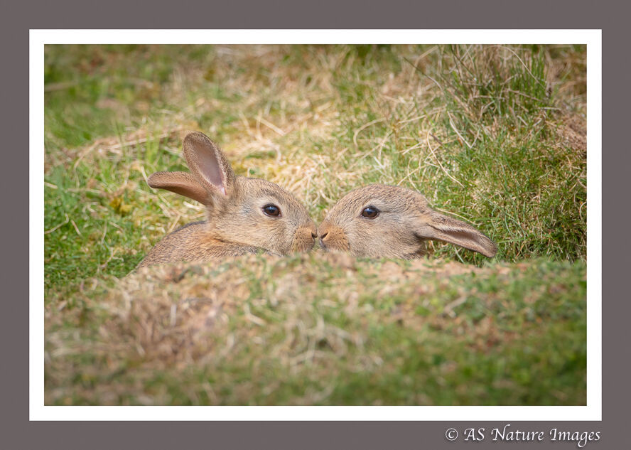 Nose to Nose - Baby Rabbits