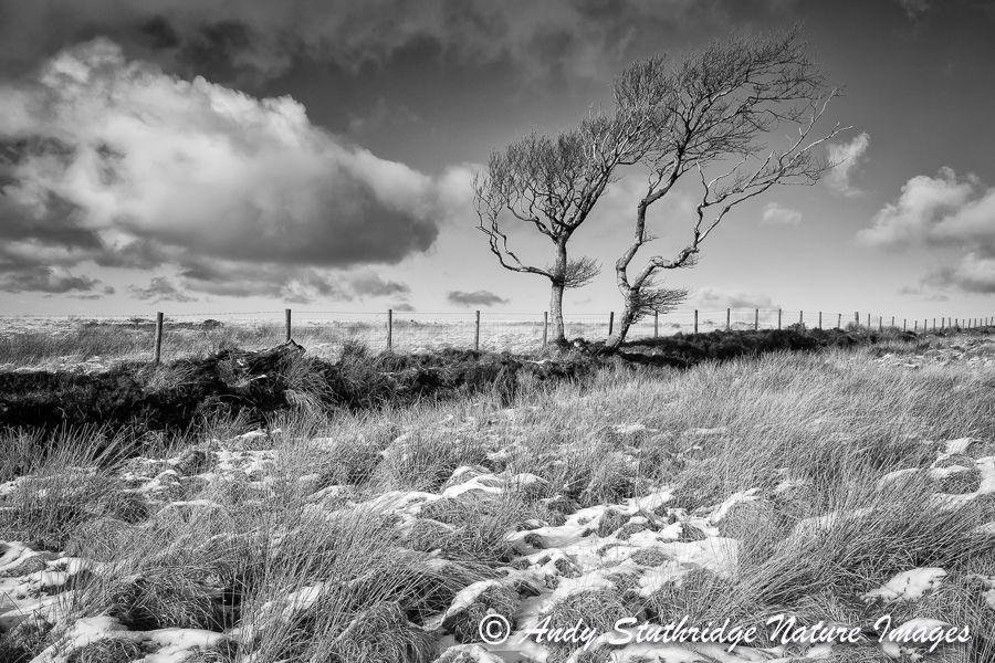 Winter Tree,Exmoor