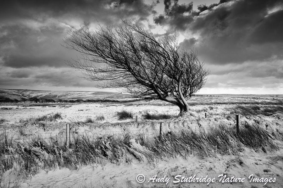 Windswept,Exmoor