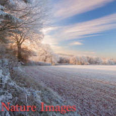 WINTER DAWN,TIVERTON,DEVON