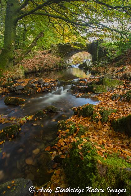 Autumn Colours at Robbers Bridge,Exmoor ( Portrait Format)