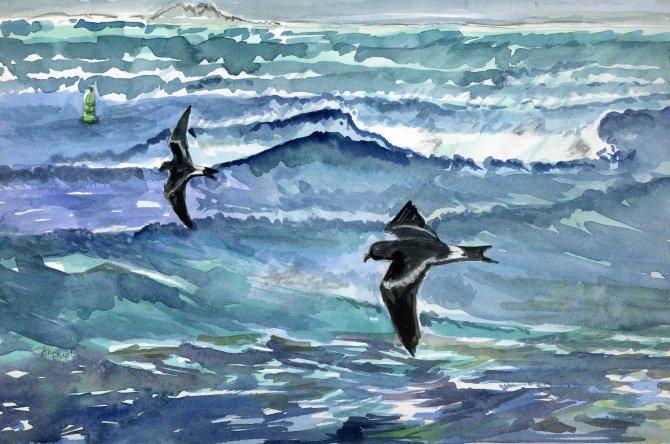 Leach's Petrels