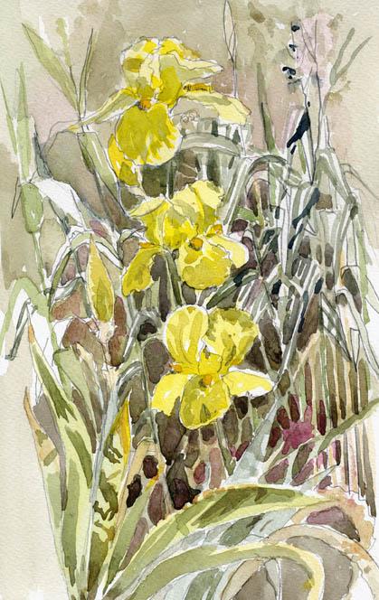 Three Yellow Irises