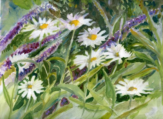 Daisies in July