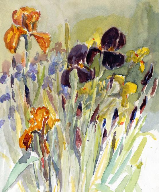 More of the Irises