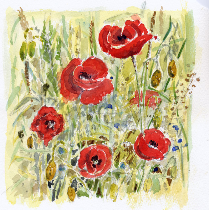 Poppies Orne