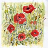 Poppies Orne