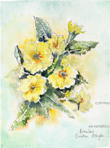 Primulas yellow