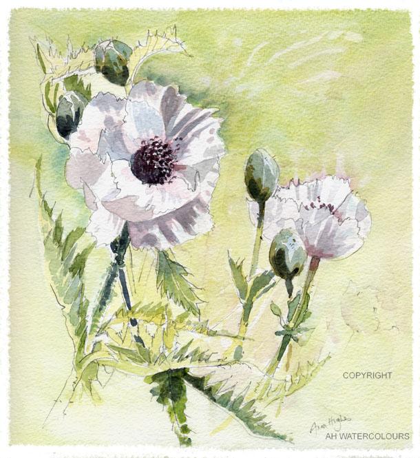 The Pale Poppy