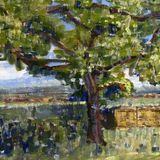 Tree at Manor Farm, Kingsnorth