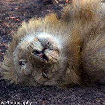 Hmmm why is that photographer upside down. Silly human!!