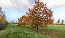 colour of autumn 1