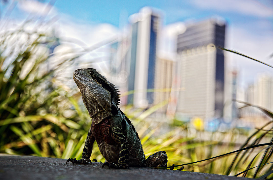 Godzilla! Brisbane, Australia