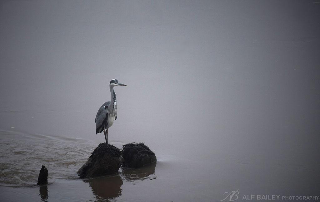 Fishing Fog