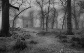 The Bane of Bogle Wood