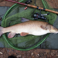 Manchester Barbel caught on Monster Crab