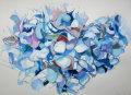 Hydrangea bloom 1, 2014