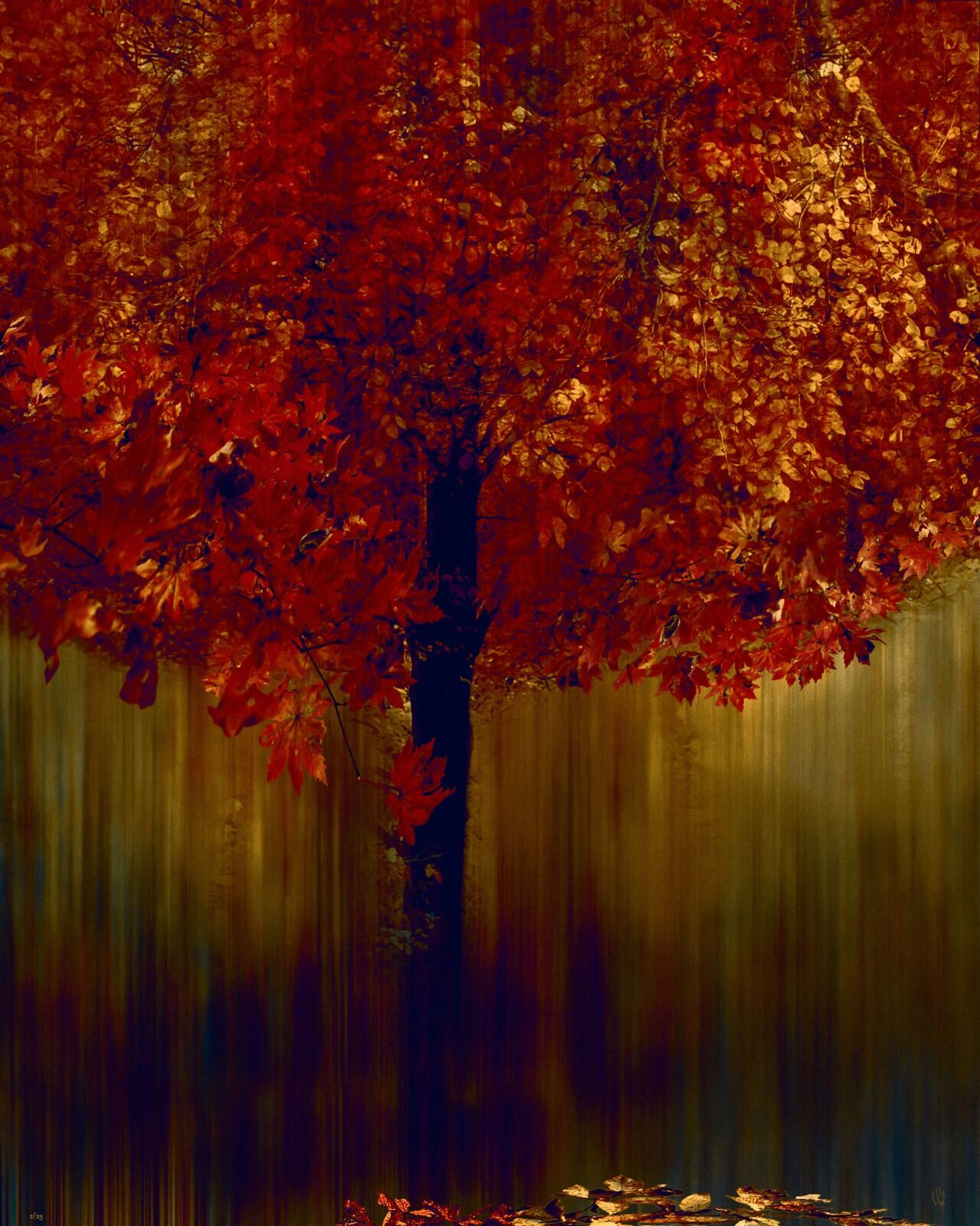 Autumnal Tree - Mixed Art Effect