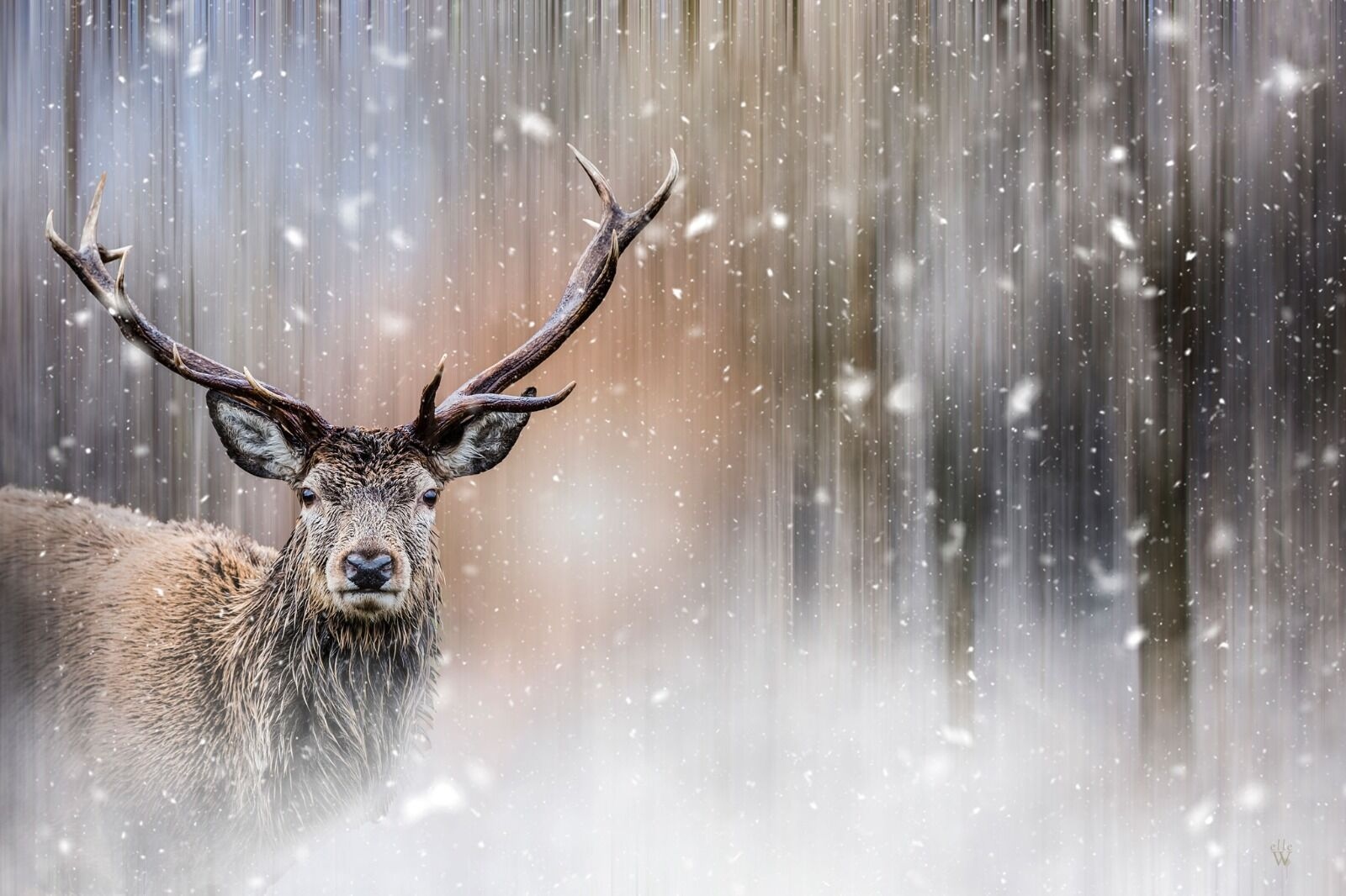 Stag in the snow - Mixed Art Effect