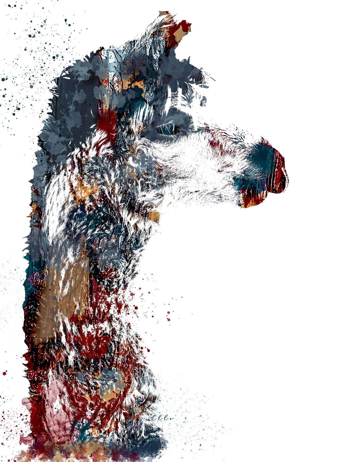 Alpaca Abstract