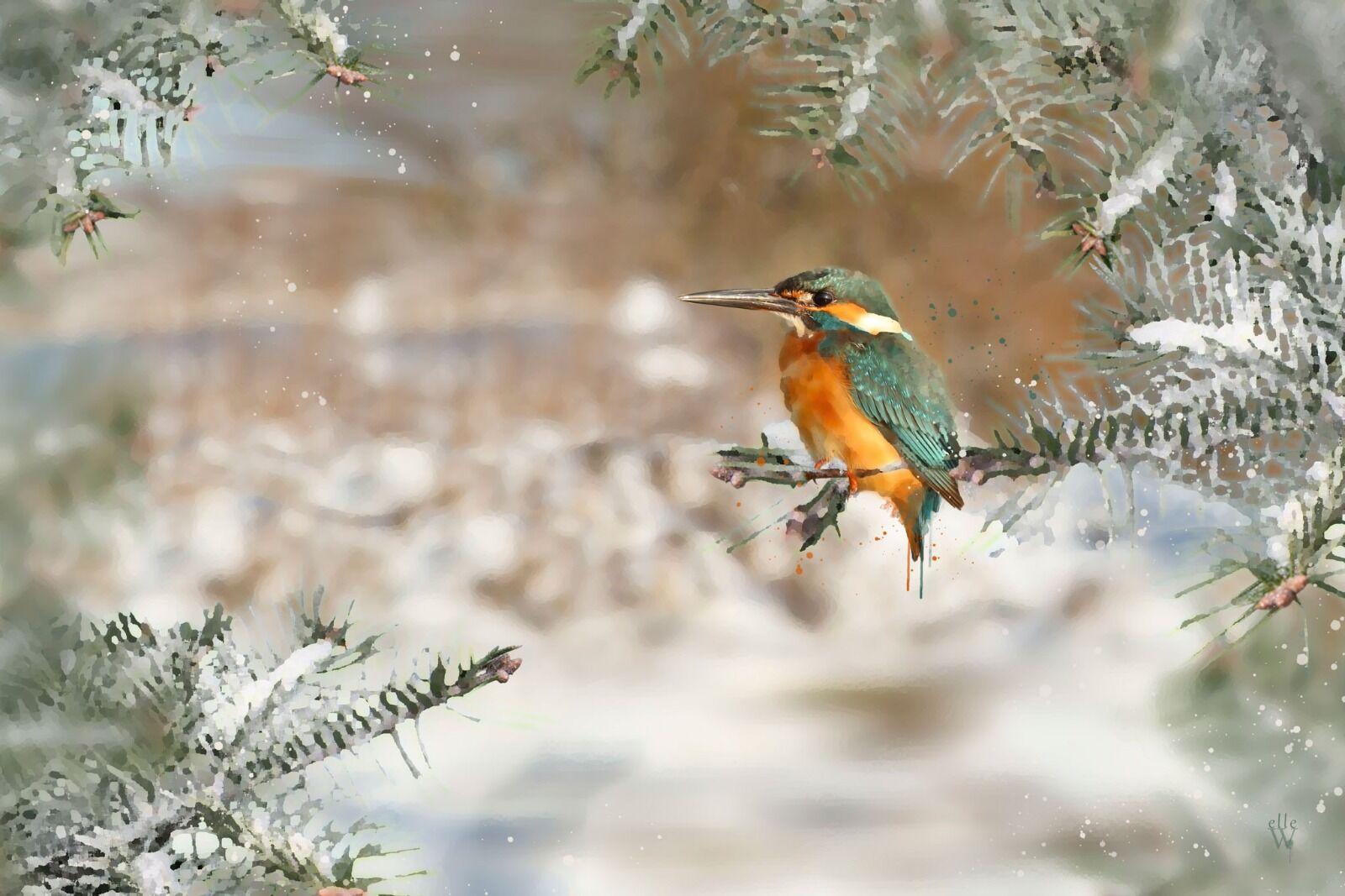 Kingfisher - Mixed Art Effect