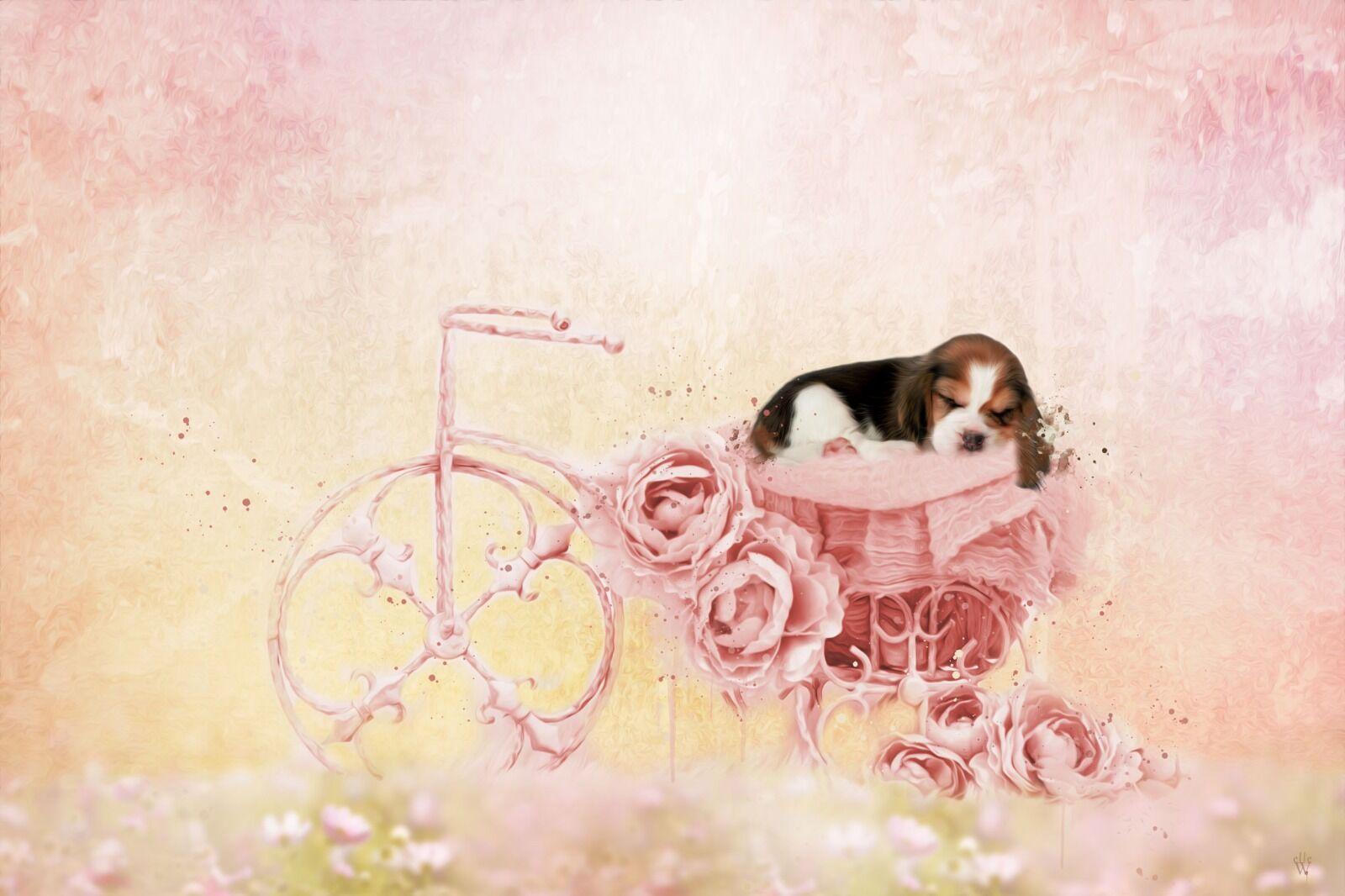 Sleeping Puppy- Mixed Art Effect