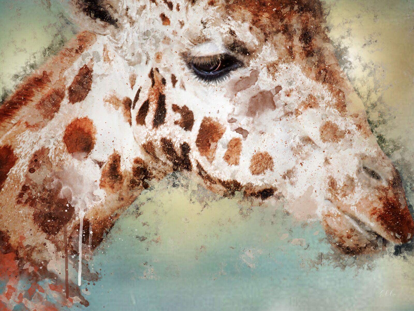 Giraffe - Mixed Art Effect