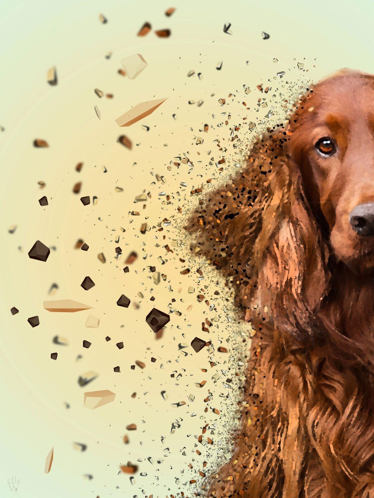 Red setter dog - Dispersion Effect