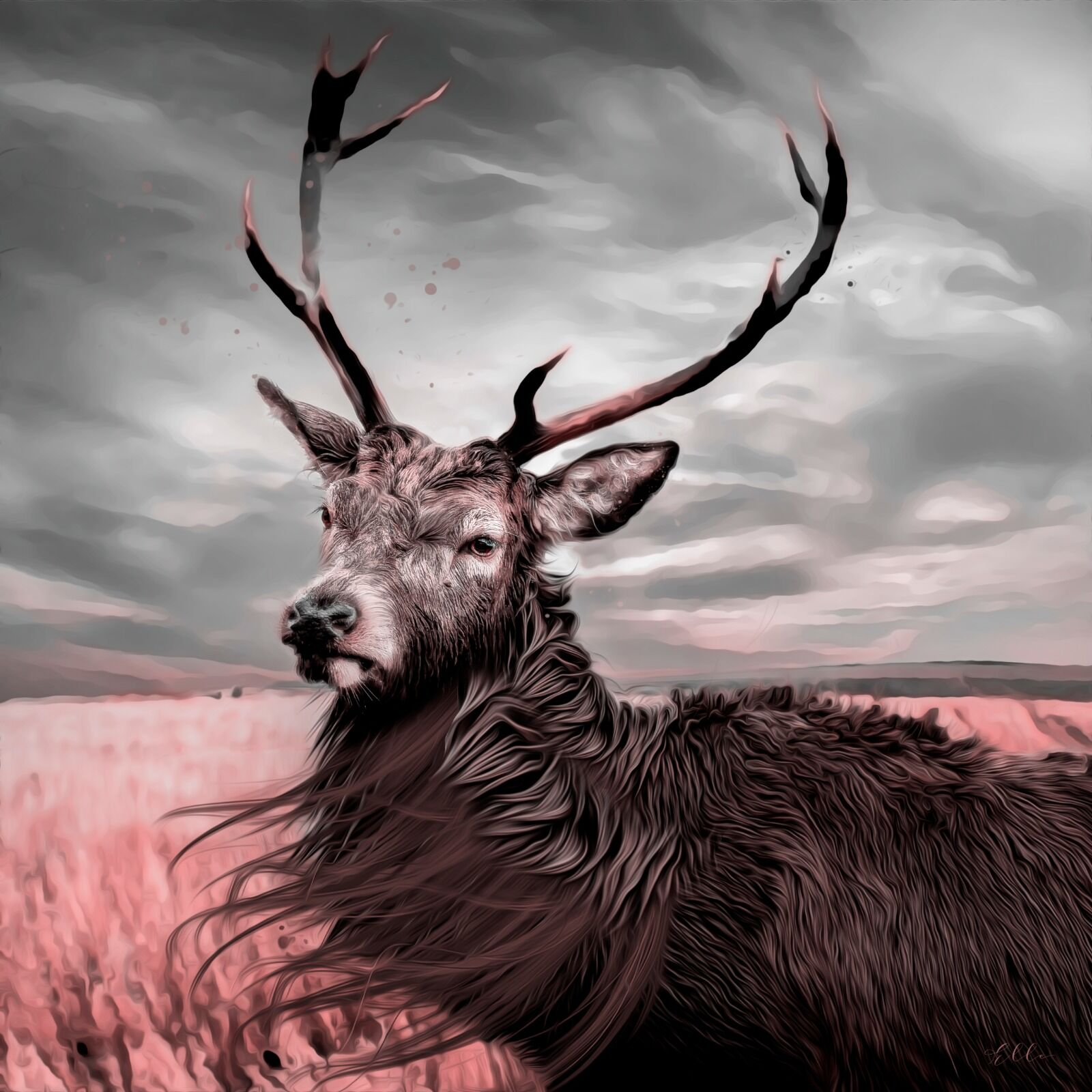 Male stag