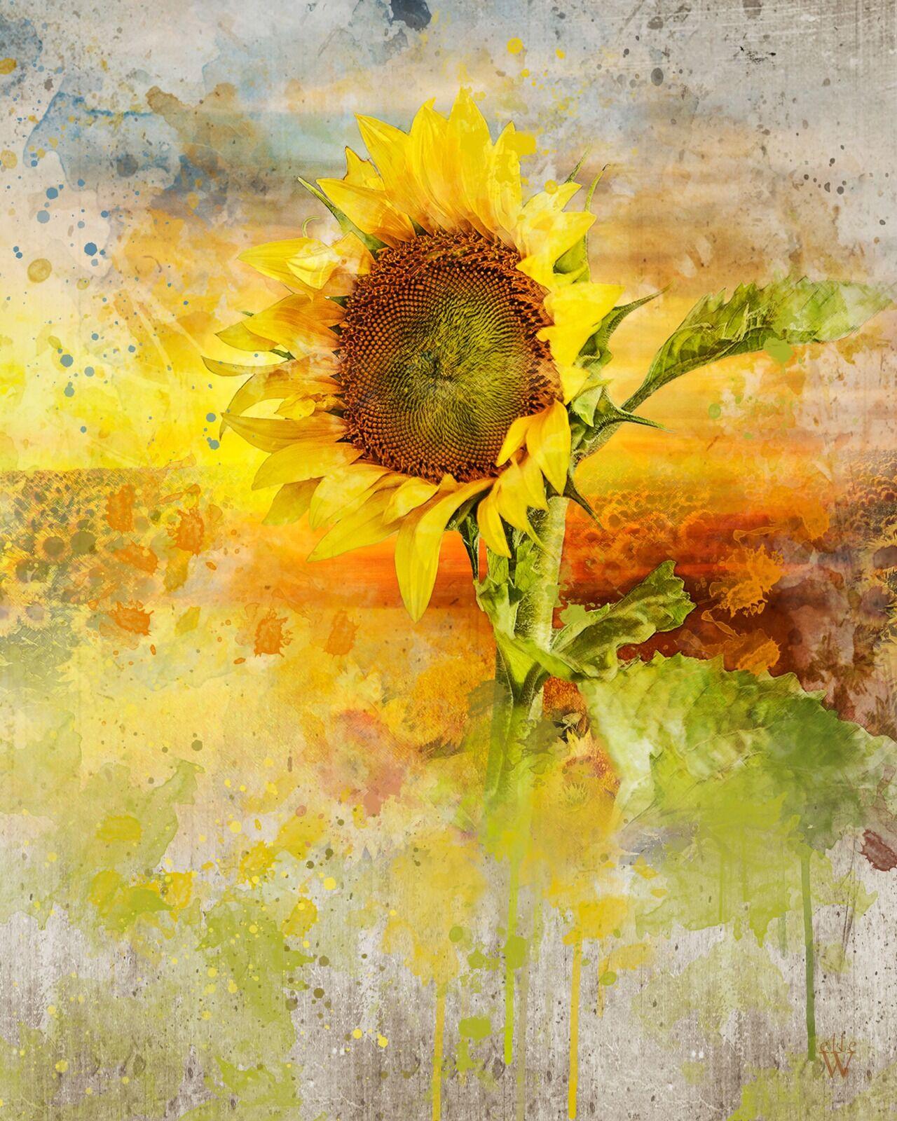 Sunflower - Mixed Art Effect