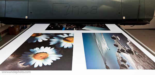 Display Board Print 87L