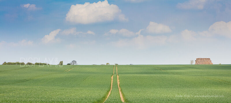 tractor tracks in wheat