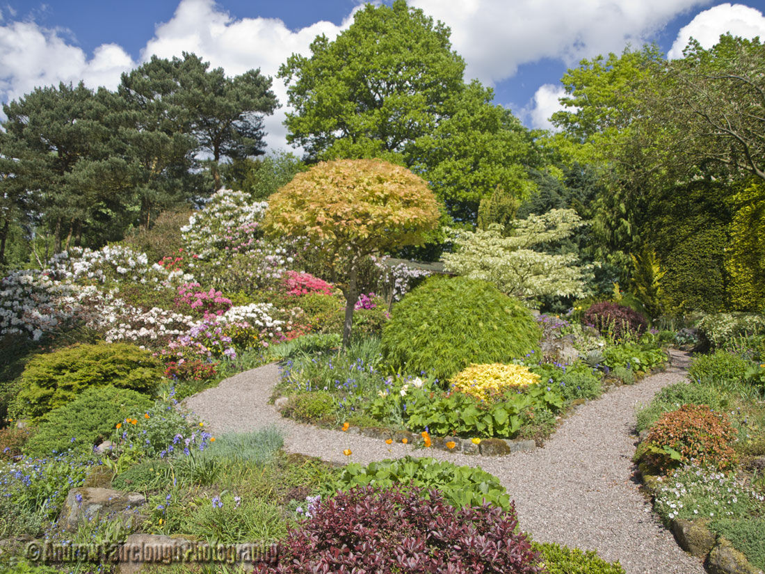 Rhododendrons & Azaleas at Lea Gardens