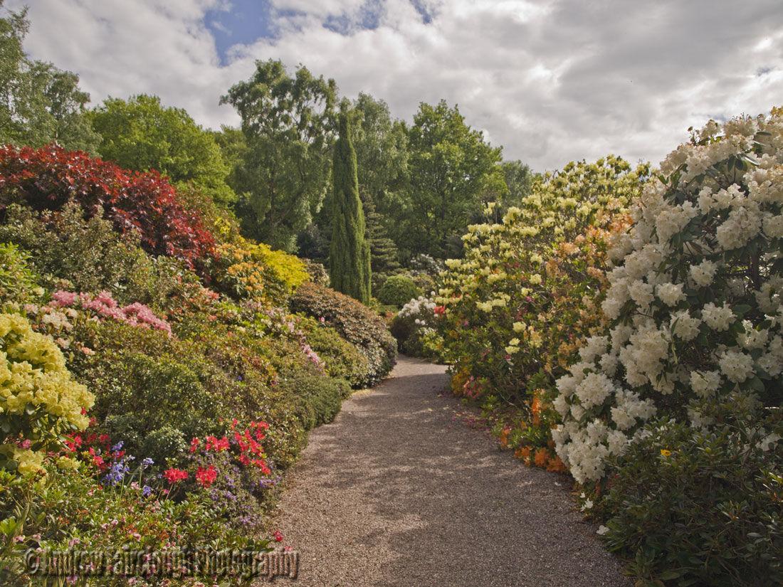 Azalea Borders at Lea Gardens