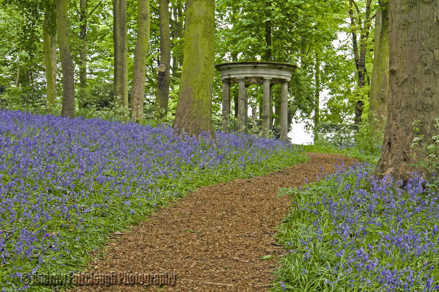 Bluebell woods - Renishaw Hall and Gardens