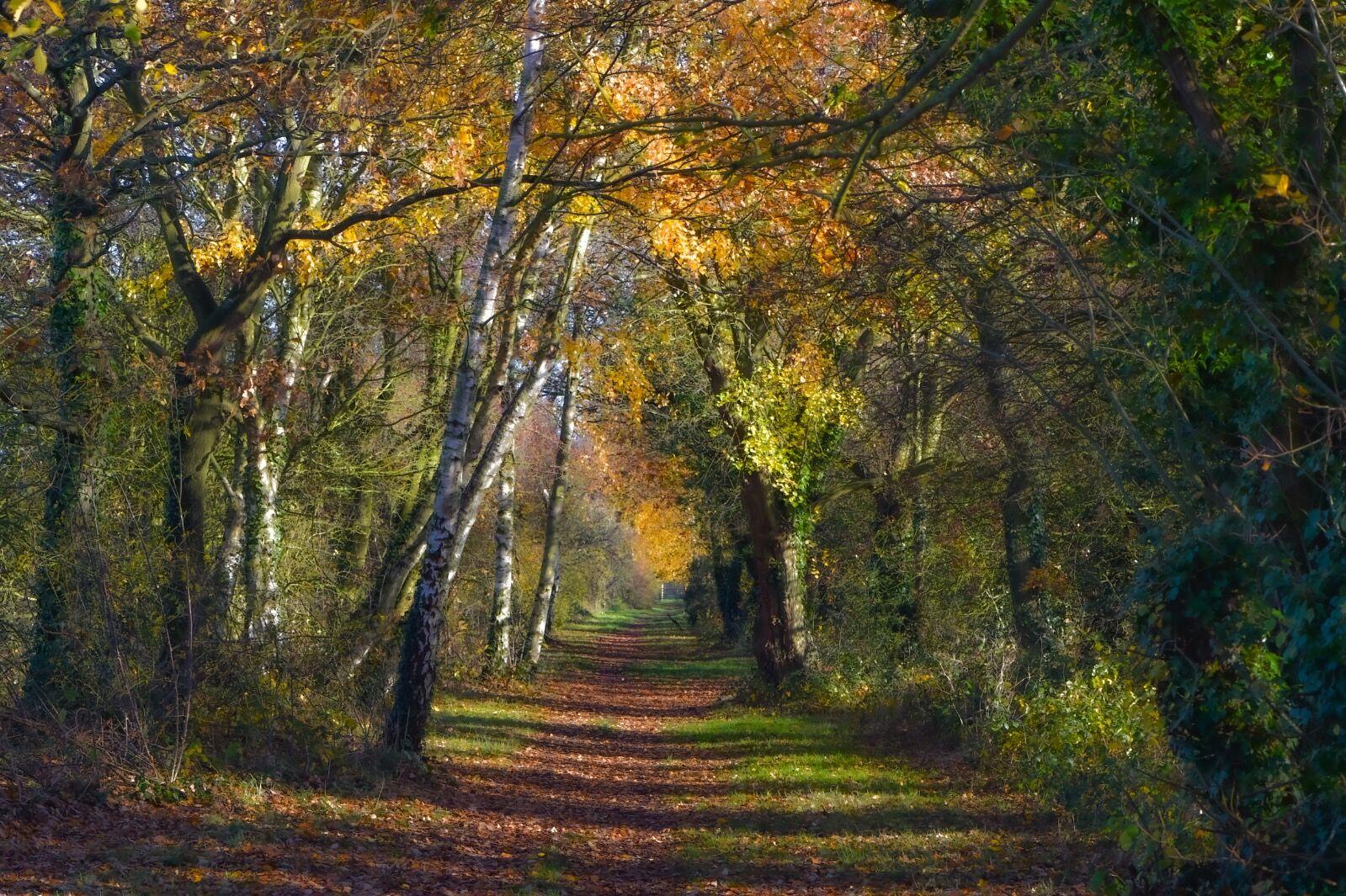 Dingle Dell in Autumn Colours