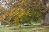 Badbury Rings in Autumn