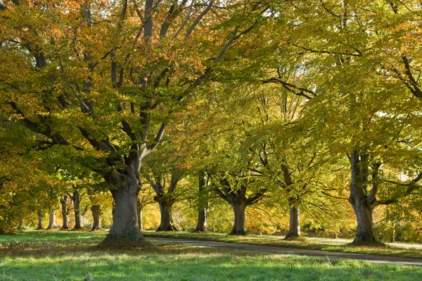 Badbury Rings in Autumn