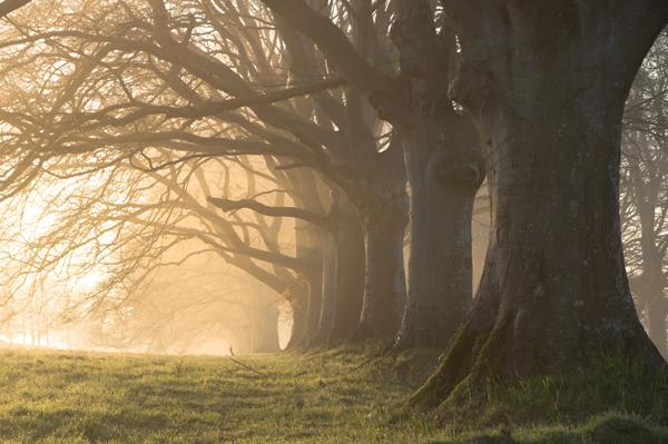 Dorset Trees Workshop