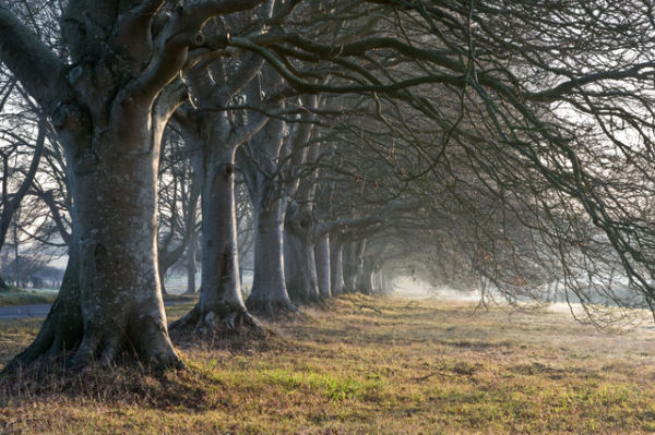 Dorset Trees Workshop