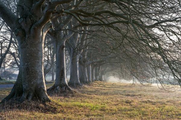 Badbury Rings in Winter