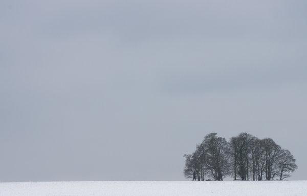 Bloxworth Trees